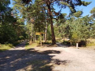 Wege im Darßwald