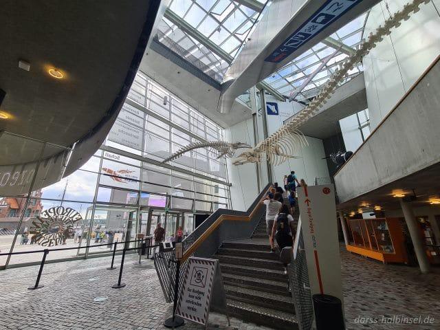 Eingang Ozeaneum Stralsund