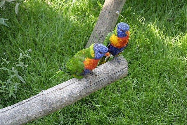 Zwei Papagein im Vogelpark Marlow