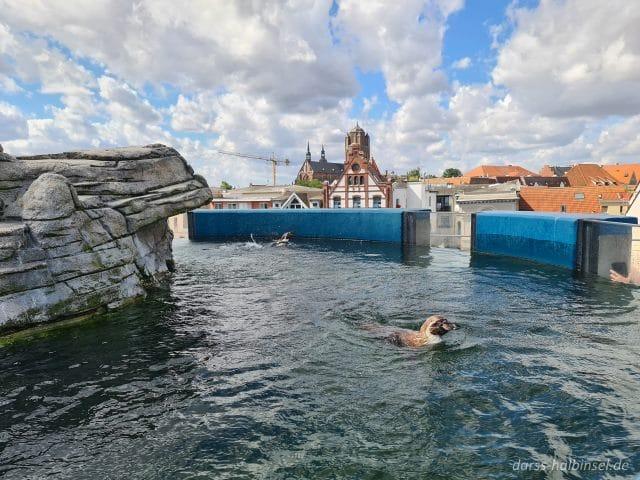Pinguine Ozeaneum Stralsund