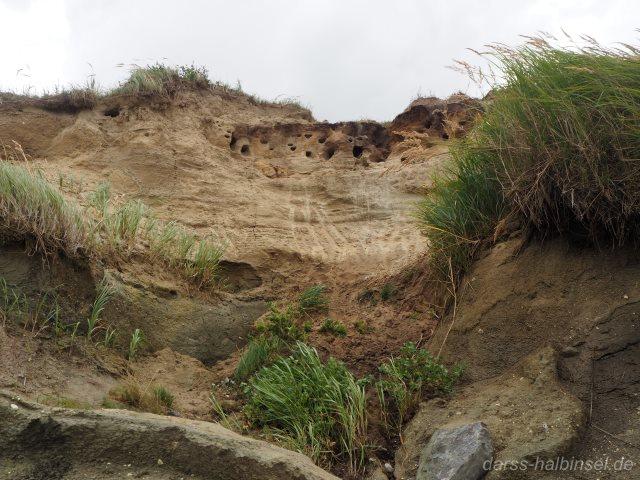 Brutplätze Uferschwalben Hohes Ufer Ahrenshoop